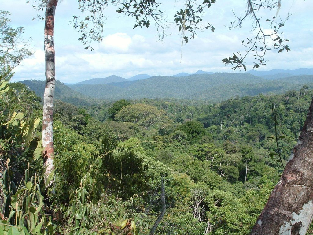 Lush treetops with mountains in the distance
