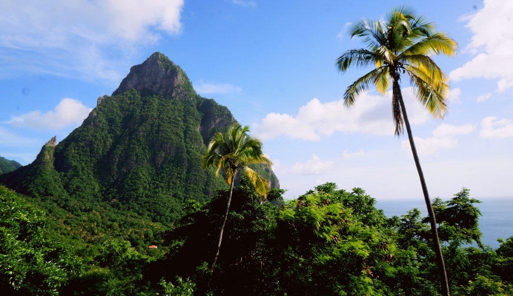 Palm trees beside a mountain