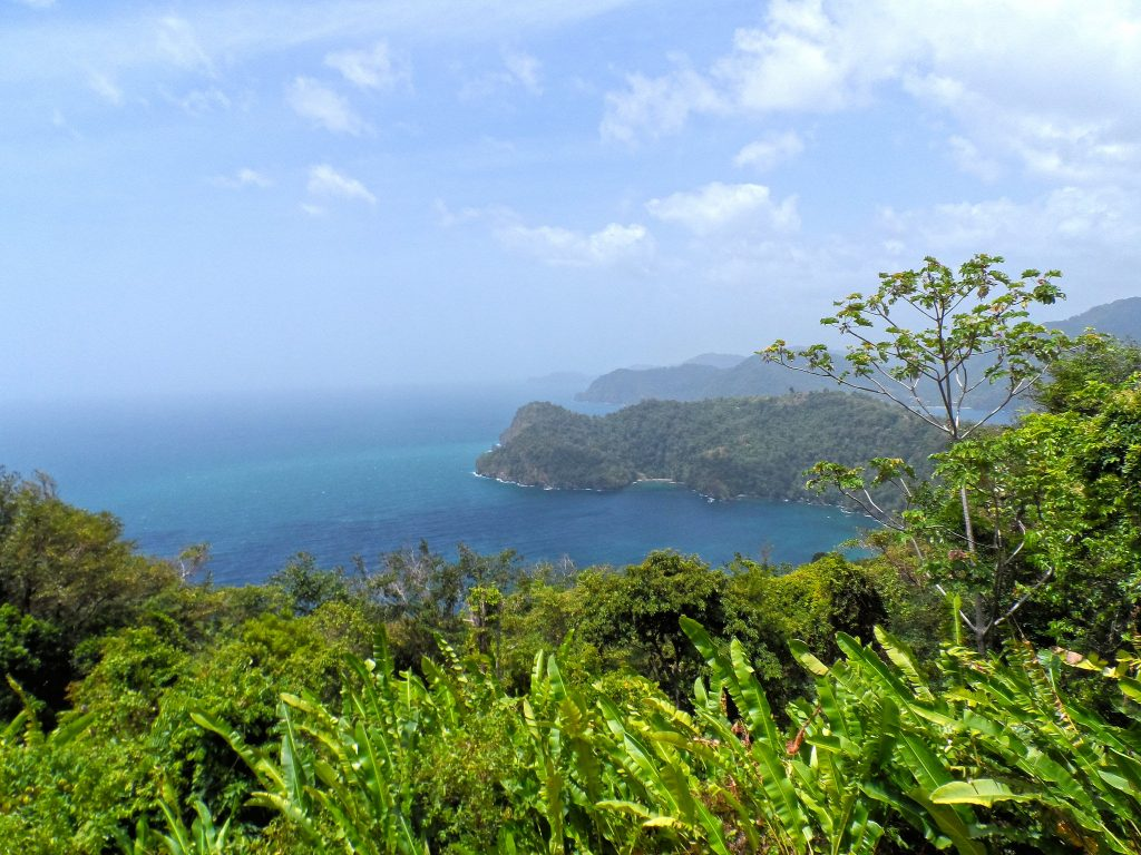 Lush greenery and an ocean view